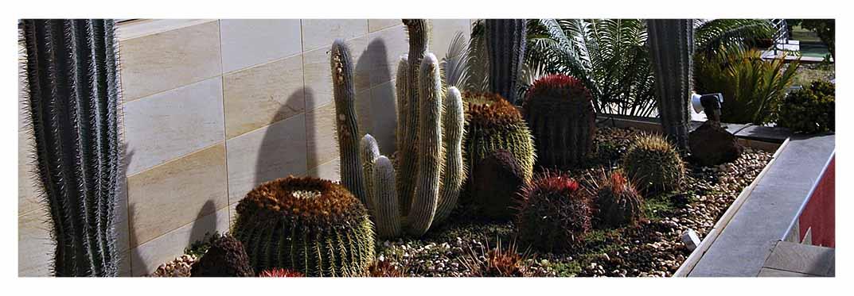 Jardín-Botánico-Viera