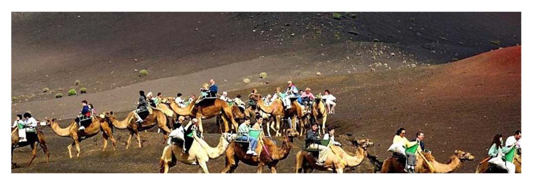 Excursions-in-Gran-Canaria-with-camels