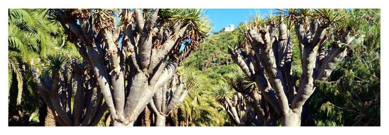 botanic-garden-in-las-palmas
