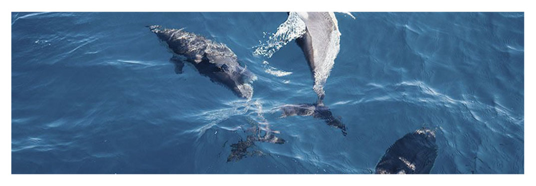 Dare-to-see-whales-and-dolphins