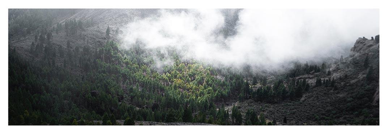 pilancones-pine-forest-villa-gran-canaria