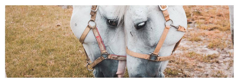 Paseo-caballo-sur-gran-canaria