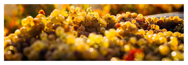 vineyards-villa-gran-canaria