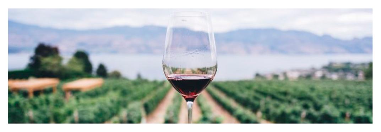 Vino-original-villa-gran-canaria