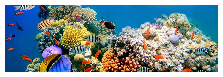 especies-marinas-villa-gran-canaria