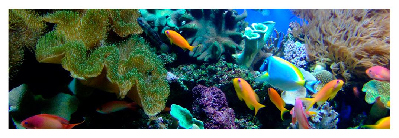 habitat-marino-villa-gran-canaria
