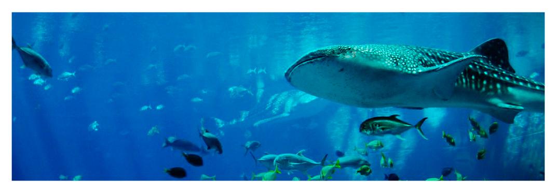 Tiburones-villa-gran-canaria