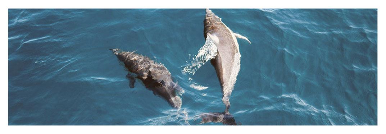 The-Supercat — Gran-Canaria-Dolphin-Boat -Trip
