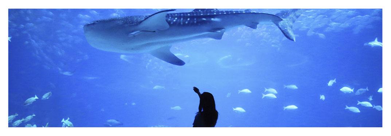 aquarium-in-Gran-Canaria