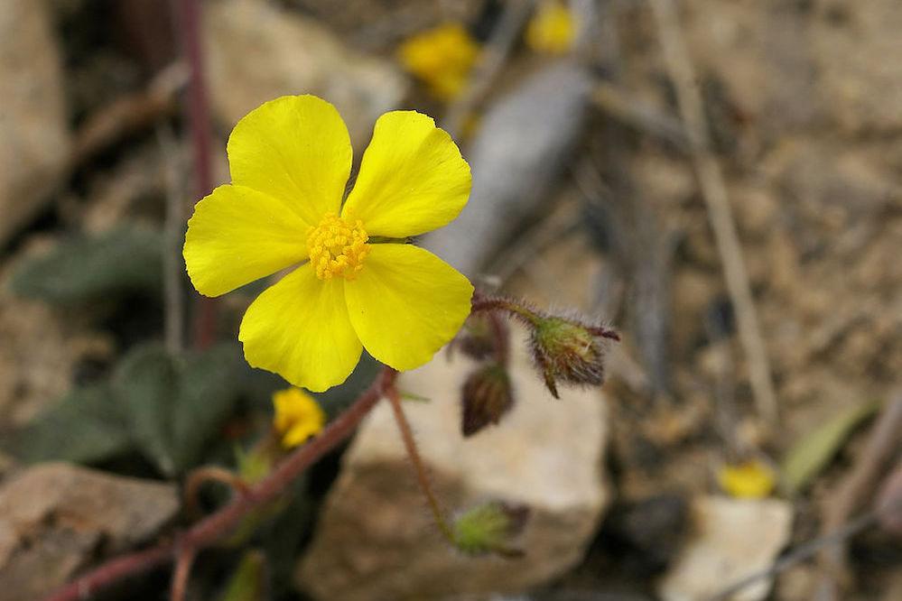 flora endemica canarias