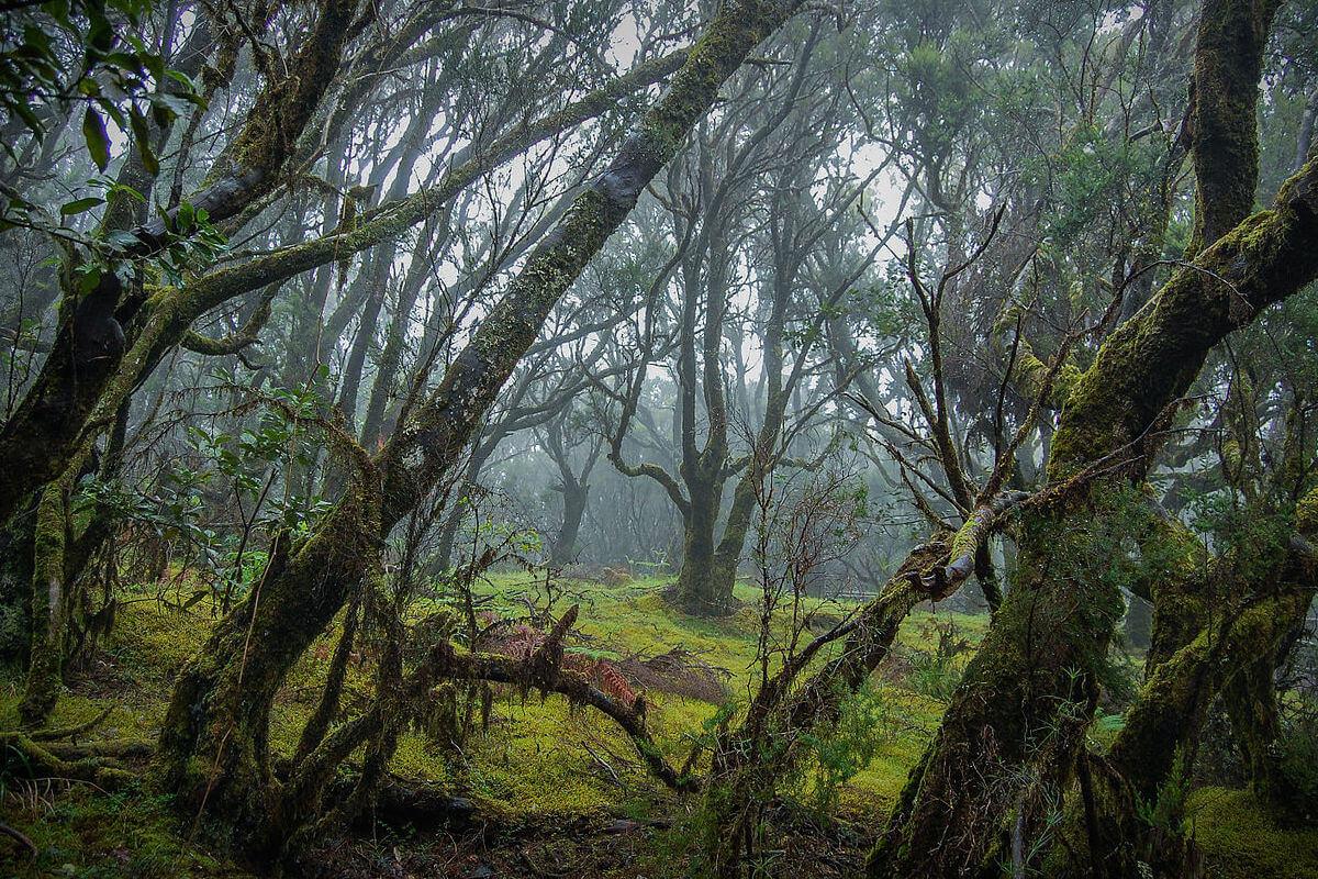 planes romanticos islas canarias