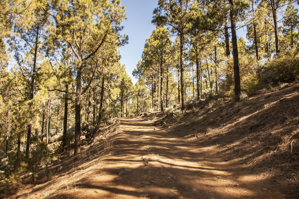 royal trails gran canaria