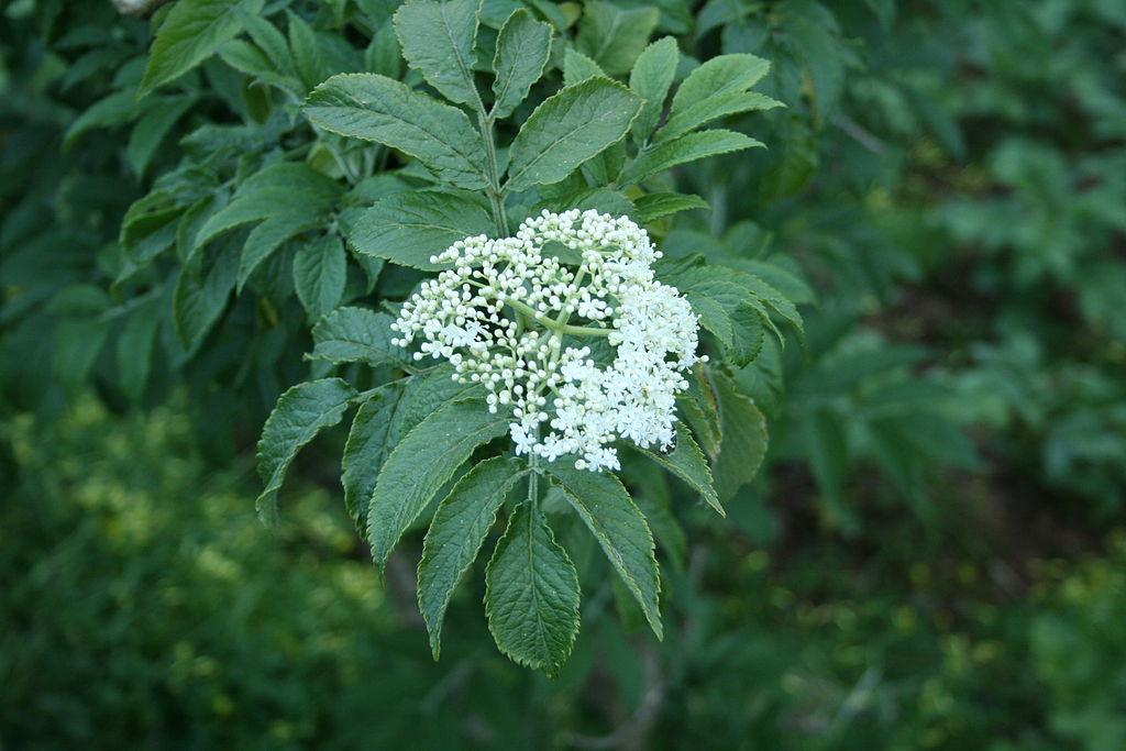 flora barranco de azuaje